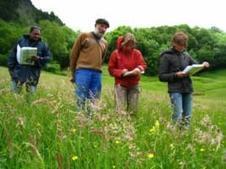 KAIRN - Prairies fleuries de montagne des Pyrénées : concours reconduit | montagne | Scoop.it