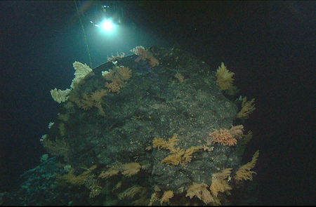 Clear Cutting the Seafloor: Deep-Sea Trawling | All about water, the oceans, environmental issues | Scoop.it