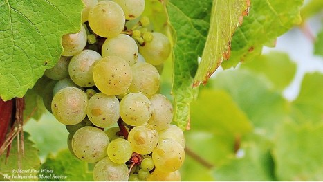 2015 Dry German Riesling | An Overview | Gastronomy & Wines | Scoop.it