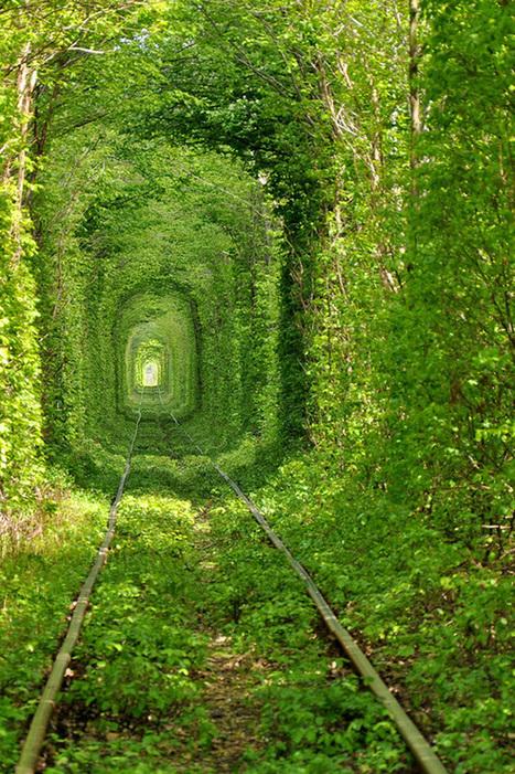 Beautiful Train Tree Tunnel | World Travel | Scoop.it