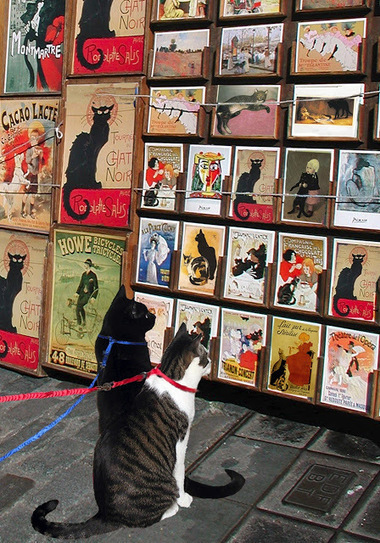 The Thing About Cats: Chat Noir-the Next Generation | Cat Art | Scoop.it
