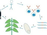 Virology - Plant virus expression vectors set the stage as production platforms for biopharmaceutical proteins   Plant Genetics, NGS and Bioinformatics   Scoop.it