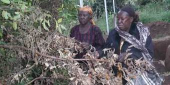 UGANDA | Karamoja: Impact of Climate Change on Grassroots Women | Climate Smart Agriculture | Scoop.it