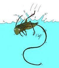 Bon parasite, mauvais parasite : la nature a un emploi pour tout le monde [en anglais] | EntomoScience | Scoop.it