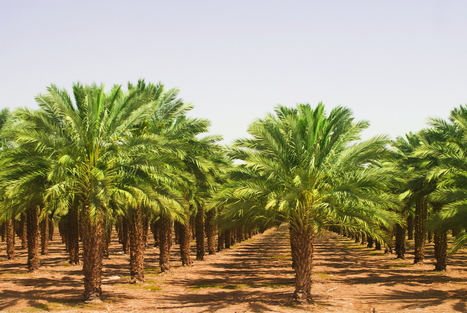 Henkel and BASF's Industry Partnership with Solidaridad Demonstrate Manufacturer Commitment to Sustainable Palm Oil | Sustainable Procurement News | Scoop.it