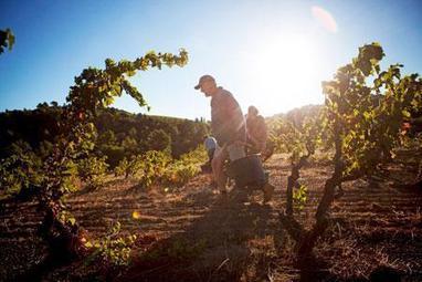 Baromètre Agrodistribution : Vent frais surlaconfiance desviticulteurs | Agriculture en Gironde | Scoop.it