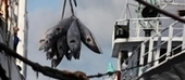 Floating freezers full of #Tuna, but where did it come from?  #Greenpeace | Rescue our Ocean's & it's species from Man's Pollution! | Scoop.it