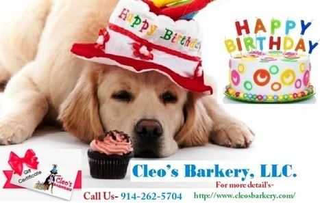 Looking For A Perfect Dog Birthday Cake