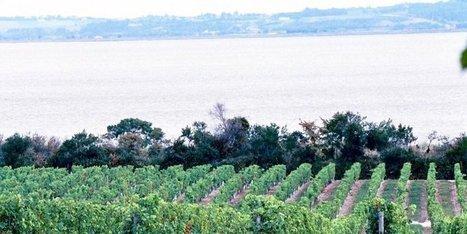 Autorisations supplémentaires de plantations de vignes: les textes publiés au JO   Agriculture en Dordogne   Scoop.it