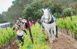 L'AOC Languedoc se déguste et multiplie les fêtes pour le grand public d'avril à septembre 2013   Wine Tourism France   Scoop.it
