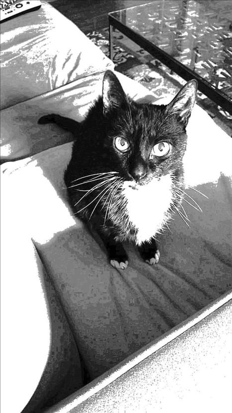 Not Just Another Deceased Pet Story — Medium | Emotional Wisdom | Scoop.it