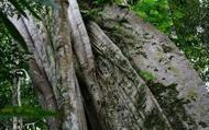 Carte interactive: les points noirs de la déforestation dans le monde | Ca m'interpelle... | Scoop.it