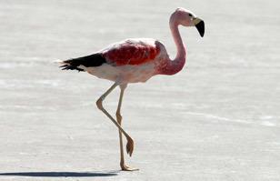 Consejos básicos para fotografiar aves (I) | Fotografía | Fotografia aos molhos -Photo everything | Scoop.it