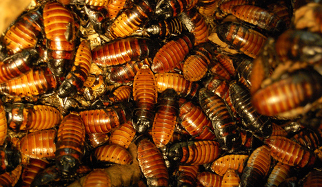 Can insects save from hunger? - The Voice of Russia | eating insects = win | Scoop.it