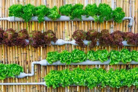 Como iniciar tu Jardin de Permacultura en unos pasos | Permacultura y autosuficiencia | ecoagro | Scoop.it