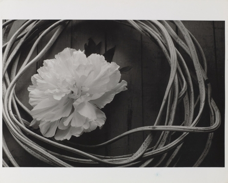 Thousands of Minor White's Photographs Go Online | L'actualité de l'argentique | Scoop.it