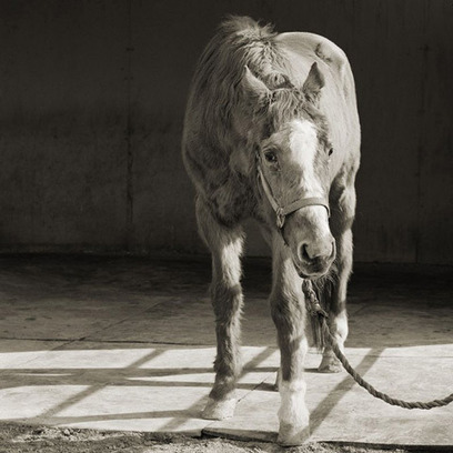 Touching Portraits of Aging Farm Animals | Visual Culture and Communication | Scoop.it