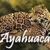 Ayahuasca  アヤワスカ