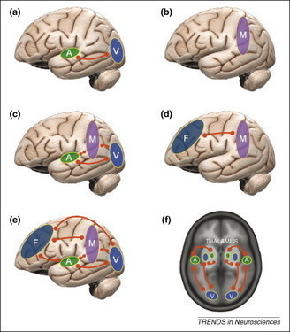 Preserving the Self for Later Emulation: What Brain Features Do WeNeed?   leapmind   Scoop.it
