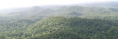 La forêt amazonienne de France bientôt en certification PEFC | D'outre-terre, d'outre temps | Scoop.it