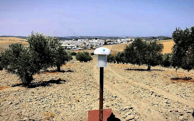 ITALY: Puglia Invests in Early Detection of Olive Tree Diseases and Pests
