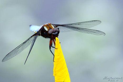 Les cours d'eau contaminés aux pesticides déciment la biodiversité | EntomoNews | Scoop.it