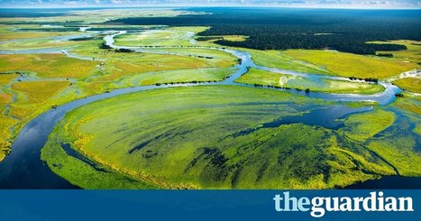 We are destroying rainforests so quickly they may be gone in 100 years | John Vidal | Confidences Canopéennes | Scoop.it