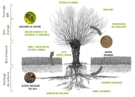 L'arbre fait son retour dans les champs - France Info | EntomoNews | Scoop.it
