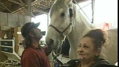 Horse and carriage rider reunite after wild weekend ride in Old Montreal | CTV Montreal | Carriage Driving Radio Show | Scoop.it