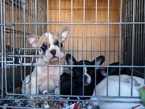 PUPS Act would close Internet loopholes left open for far too long ... | Animals R Us | Scoop.it