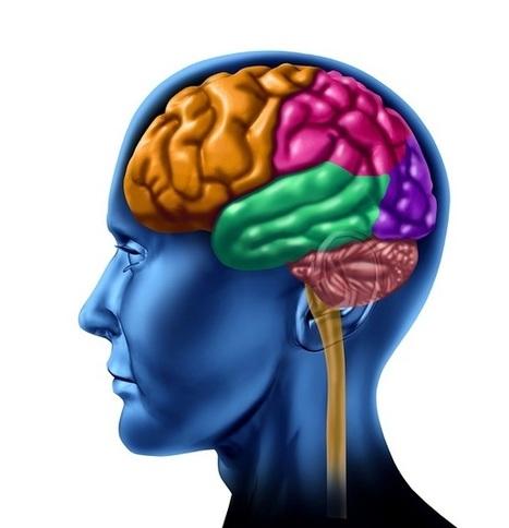 Lóbulos Cerebrales: Anatomía, Fun...