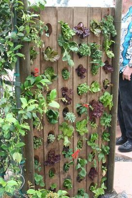 A clever edible wall | Upcycled Garden Style | Scoop.it