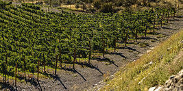 Unique Terroir of the Okanagan's Golden Mile Produces Distinctive Wines - Okanagan Life Magazine | Wine and food | Scoop.it
