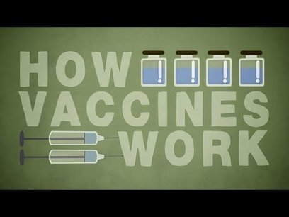 How do vaccines work? - Kelwalin Dhanasarnsombut | TEDtalks | Scoop.it