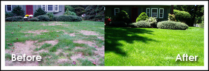 Grass Stitcher: Innovative Lawn Repair Tool for Lawn Damage   Cool Stuff for the Home & Garden   Scoop.it
