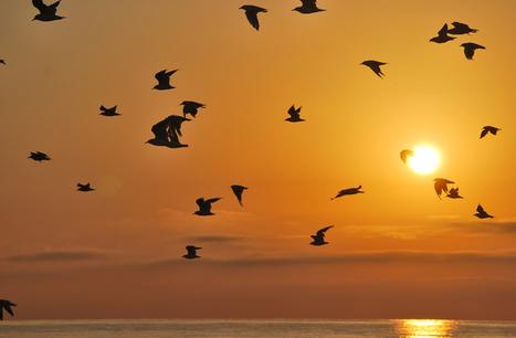 No capture pokémones, busque aves. Use eBird, una aplicación gratuita - Ecoportal.net   Agua   Scoop.it
