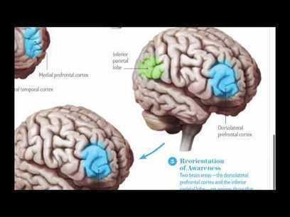 ¿Qué le sucede al cerebro cuando medita? | Pedalogica: educación y TIC | Scoop.it