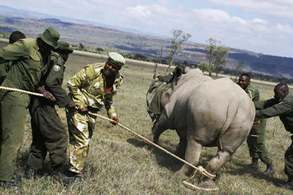 African conservation community announces comprehensive response to rhino poaching crisis   Saving the Wild: Nature Conservation in the Caucasus   Scoop.it