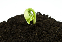 Google+ Community: 7 Ways To Grow | Social Solutions Collective Articles | Scoop.it