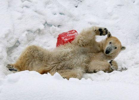 Bear Fun | Happiness &  Wellbeing | Scoop.it