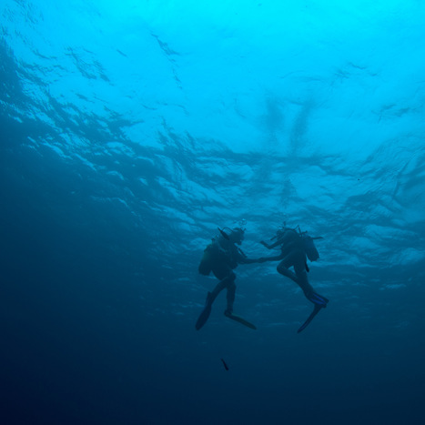 Can I dive with a cold? | Lets Get Wet - Scuba and Ocean News | Scoop.it