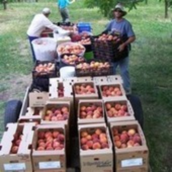 Help Sustain Our Local Orchard | real utopias | Scoop.it