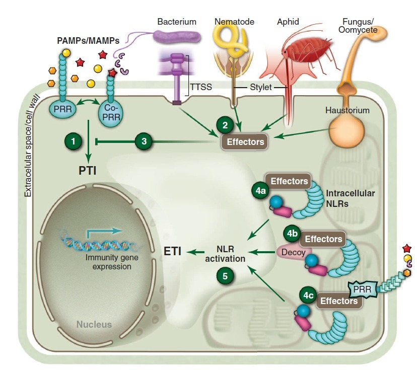immune system essays