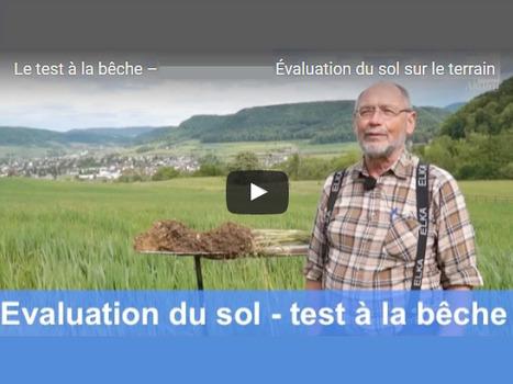 Mini profil du sol : le test à la bêche – Évaluation du sol sur le terrain avecGerhard Hasinger | SPATEN   Test Bêche | Scoop.it