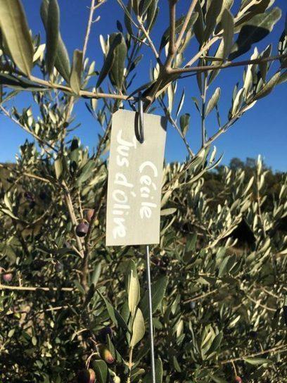 Devenir co-producteur d'un olivier dans le Luberon ça vous tente?   Jus d'olive   Jus d'Olive   Scoop.it