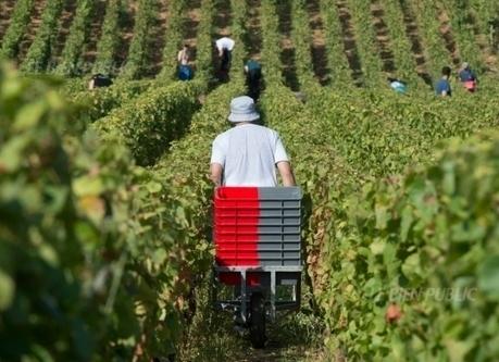 Le marsannay aura-t-il son premier cru ? | Route des vins | Scoop.it