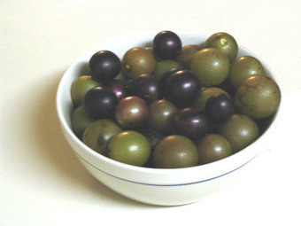 SCUPPERNONG OR MUSCADINE?  You decide.© | Ethnobotany in the US Mid Atlantic | Scoop.it