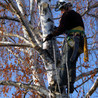 Stamm's Tree Service