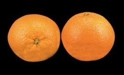 USDA Steps Up Citrus Greening Fight As GMO Fix Looks Promising - Food Safety News | Plant Based Transitions | Scoop.it