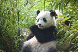 Conseil pratique - Comment aider les animaux en voie de disparition ?